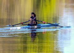 Sculling down the river (johnny4eyes1) Tags: wildlife reflection skull nature boating birds water river rowing watersports sports anacostia