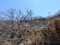 USA-2016_Tecate-Jacumba: Campo Wildfire (Robert S. aus W.) Tags: usa2016 usa kalifornien california amerika america sandiegocounty grenze grenzbefestigung zaun absperrung border flora fauna vereinigtestaaten mexiko mexico trocken hitze wste desert tecate jacumba tecatepeak feuer buschfeuer wildfire asche verbrannt heis unlimitedphotos