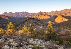 Flinders Ranges from near Acraman camp (Rod Burgess) Tags: flindersranges southaustralia wilpena canon5dmkii canon1635f4l sunr mountains flowers