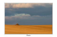 IMGP5694 (Francinen89) Tags: champs paysage jaune minimalisme campagne bourgogne