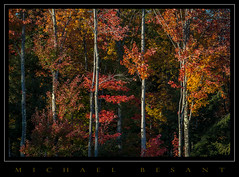 Autumn Days (Michael Besant) Tags: vermont newengland autumn colorful trees