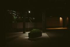 Under The Highline (TheHolyFlipster) Tags: hedge bridge under spotlight nyc
