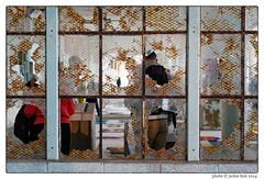 141029091 (Jackie Link) Tags: tourism island freedom prison alcatraz sanfranciscobay artinstallation penitentiary thewind aiweiwei chinesedragonkite jackielink