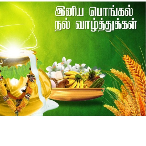 Happy PONGAL Everyone