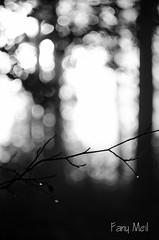 Fort du Gavre (Fan) Tags: bw white black nature de la nikon noiretblanc bokeh lumire jour loire arbre pays nantes fort flou contre bois feuille helios gavre antlantique d5100