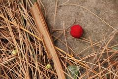 Semplicemente autunno.1 (Anfora di Cristallo) Tags: foliage autunno arbutusunedo corbezzolo floracalabrese