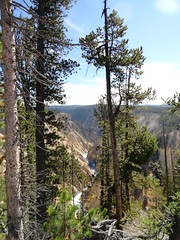 Yellowstone National Park (yellowroseoftexasmindy) Tags: trees scenery parks falls yellowstone wyoming nationalparks
