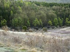 Grangelands (Damian_Ward) Tags: trees winter rural lumix countryside frost buckinghamshire panasonic naturereserve bucks dmc kimble greatkimble m43 mft gh3 1445mmlens damianward grangelands micro43 microfourthirds hfs014045 ©damianward