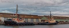 Two Tugs Svitzer Heron and Tingari (johnwilliamson4) Tags: docks river australia tugboat southaustralia topaz portadelaide