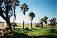 Morocco January 2015 (slo:motion) Tags: africa palm morocco palmtree atlanticocean disposable january2015