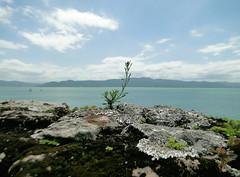 DSC08400 (yasminolm) Tags: santa floripa summer brazil beach sc brasil sony florianpolis vero catarina hx1 dschx1