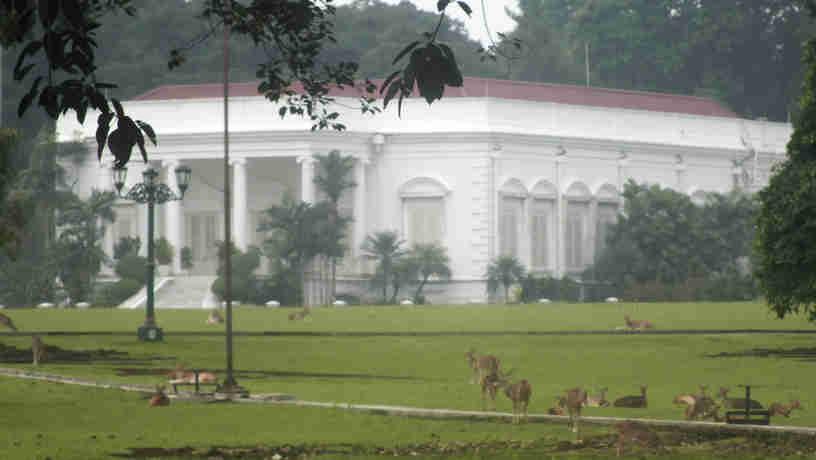 Rusa di Istana Bogor