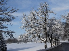 (:Linda:) Tags: road snow tree germany village curvy thuringia cherrytree brden