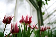 Indoor Spring