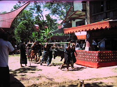 Pigs Offering Torajan Funeral