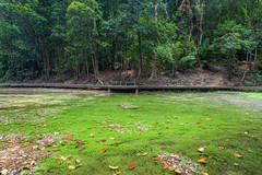 Grassy Pond (yc4646) Tags: plants tree nature water ecology pond weed scenery singapore day foliage environment environmentalism ecosystem