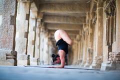 Karanda Vasana  - Mysore India, 2015 (The Yoga Shala) Tags: yoga mysore ashtangayoga practicepracticepractice theyogashala kristashirley yogainspiration ashtangayogaeveryday kristayogini