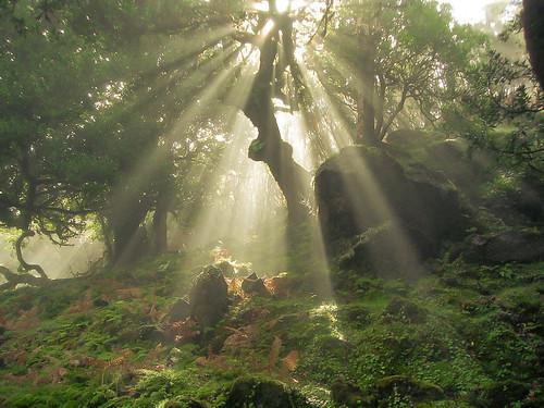 Zauberwald in Madeira