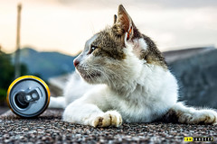 Get me another one ! (Sandeep Kumar's Photography) Tags: street beer cat nikon 1855 druk