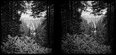 North Falls in Stereo 16073703n04 (jimhairphoto) Tags: silverfalls statepark stereo holga toycamera 6x6 120mm ilford sfx infrared film blackandwhite blancetnoir schwarzeaufweis blancoynegro blancinegre siyahrebeyaz jimhairphoto