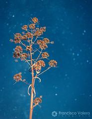 El árbol del pasado
