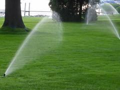 Marigold (Vernon Brad Bell) Tags: michigan holland marigold westmichigan puremichigan grass lawn sprinkler