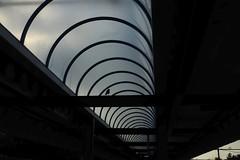 stationary bird (IcarusBlue) Tags: railroad station platform ceiling jackdaw arched