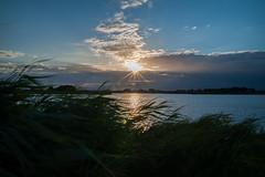 Sunset and reed movement (PaulHoo) Tags: sun sunset 2016 summer water reflection nature landscape waves current movement blue waterscape polder grootmijdrecht waverveen botshol holland netherlands reed sky sunray ilobsterit