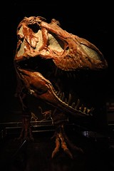 From one old dino to another... (LindaJ55) Tags: dinosaur fossil alberta royaltyrellmuseum drumheller canada unesco superb old history badlands