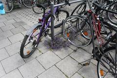 Flowers are unstoppable (sb.estate) Tags: city flowers flower sommer natur bikes blumen lila stadt nicht sind beton concret blosom unstoppable purble zement aufzuhalten