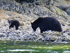 P1000724 (Tipfinder) Tags: kanada canada vancouverisland portalberni tofino ucluelet pacificrimnp long beach bearwhatching hotspringcove