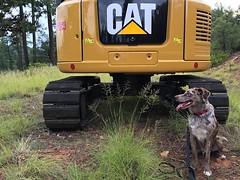 Cat? What Cat? (cogdogblog) Tags: dog cat felix