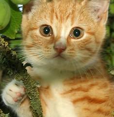 Sweetheart (Ingrid Friis Photo) Tags: summer tree cute kitten sweetheart kattunge trd sommar stnos