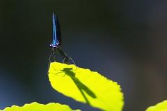 Libe8 (bidueiro) Tags: naturaleza insectos macro macrofotografa