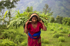 (cara zimmerman) Tags: nepal carry work heavy green countryside