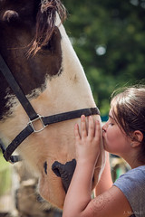 Kisses for Clydesdales (Jen MacNeill) Tags: landisvalleymuseum lancaster pa pennsylvania drafthorse kiss kindness love horse clydesdale
