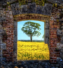 Somewhere.. (sbox) Tags: rapeseed trees rathcoffey kildare ireland rathcoffeycastle rathcoffeydemesne ruin abandoned window fields somewhere theresaplaceforus hdr yellow awardtree greatphotographers
