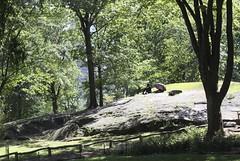 8-28-16 Sunning in Central Park (Kruvczuk1) Tags: centralpark newyork umbrella