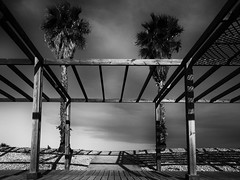 _7250498-Editar (josem_alvarez25) Tags: playa banco y negro mar caseta palmeras olympus omd em10