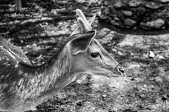 (Camila G.S) Tags: animals animalplanet animal life canon canonphotography canont5i canon700d chile composition contrast highcontrast mono monochrome bw blackandwhite blackwhitephotos black