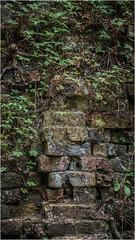 Growing in Gaps - Chilworth Gunpowder Mill (GH_DSLR) Tags: growingingaps textures albury bricks ruins