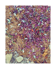 Dyandi beach Iceland. (Bert Vliegen) Tags: iceland kodakektachromee100vs chamonix45n2 rodenstocksironars180mm howtekd4000 beach