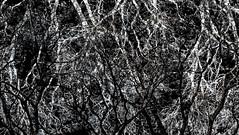 # (David C W Wang) Tags:  abstract  doubleexposure