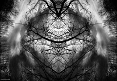 Web of branches (Daniel Arnaldi) Tags: abstractphotography australasia australia bowral clouds forest landscapes mirrorimage newsouthwales oceania plants surreal tangle tree trees branches fairytale fantasy haunting painting sky spooky surrealism symmetrical symmetry danielarnaldiphotographer