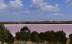 The Pink Lake... (The Pocket Rocket) Tags: australia victoria pinklake westernhighway explore313