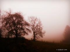 unfriendly weather (skistar64) Tags: fog outside december advent nebel krnten carinthia dezember pisweg daham drausen