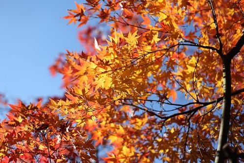 秋空にむかって