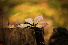 the remnant of fall (irina_escoffery) Tags:
