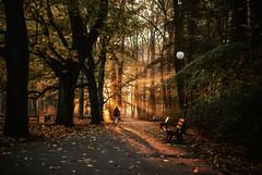 someplace to be (ewitsoe) Tags: park autumn light woman dog sun fall sunrise 35mm bench walking dawn golden europe display path sunny erik poznan nikond80 witsoe ewitsoe erikwitsoe fallinglaves