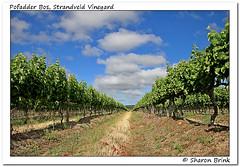 Vineyards (Brinks View of Nature) Tags: wine vineyards grapes firstsighting strandveld